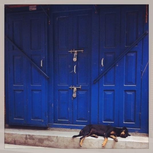Dog days in Kathmandu